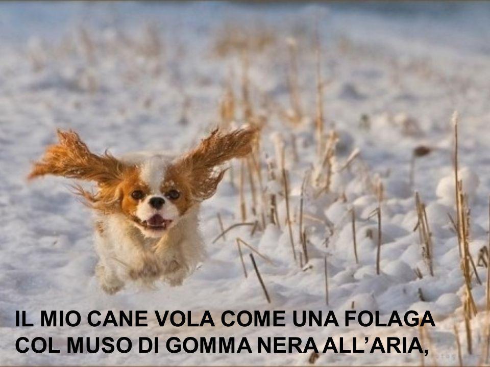 IL MIO CANE VOLA COME UNA FOLAGA COL MUSO DI GOMMA NERA ALL'ARIA,