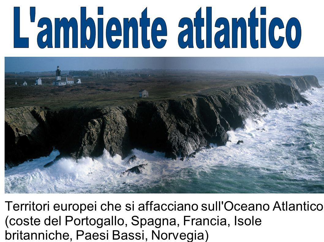 L ambiente atlantico