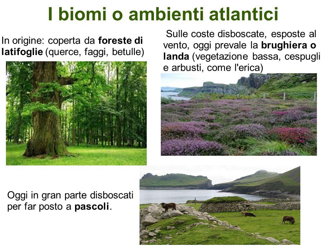 I biomi o ambienti atlantici