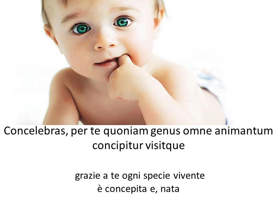 Concelebras, per te quoniam genus omne animantum concipitur visitque grazie a te ogni specie vivente è concepita e, nata