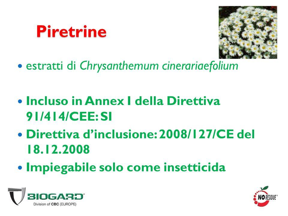 Piretrine estratti di Chrysanthemum cinerariaefolium
