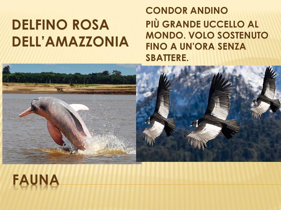 DELFINO ROSA DELL'AMAZZONIA
