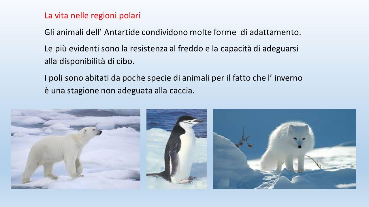 La vita nelle regioni polari