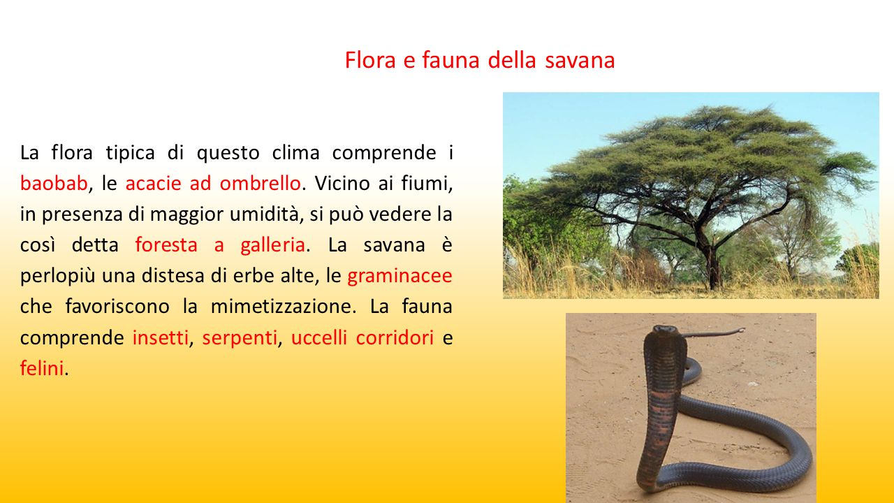 Flora e fauna della savana