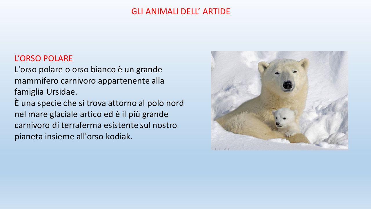 Animali piante e popoli della terra ppt video online for Affittare una cabina grande orso