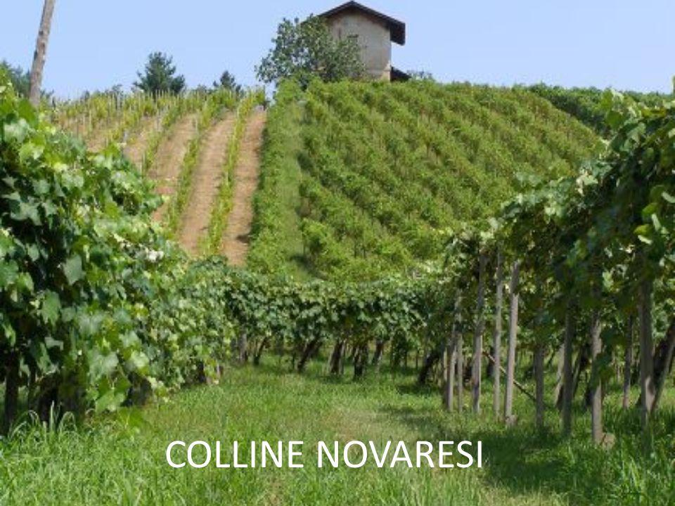 COLLINE NOVARESI