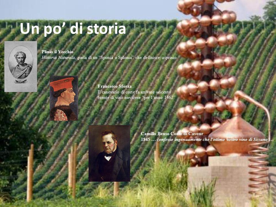 Un po' di storia Plinio il Vecchio
