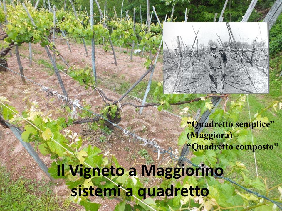 Il Vigneto a Maggiorino sistemi a quadretto