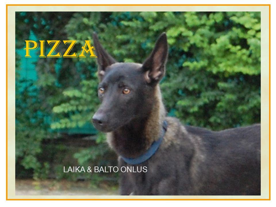 Pizza LAIKA & BALTO ONLUS