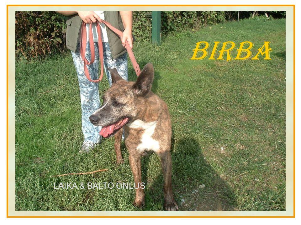 Birba LAIKA & BALTO ONLUS