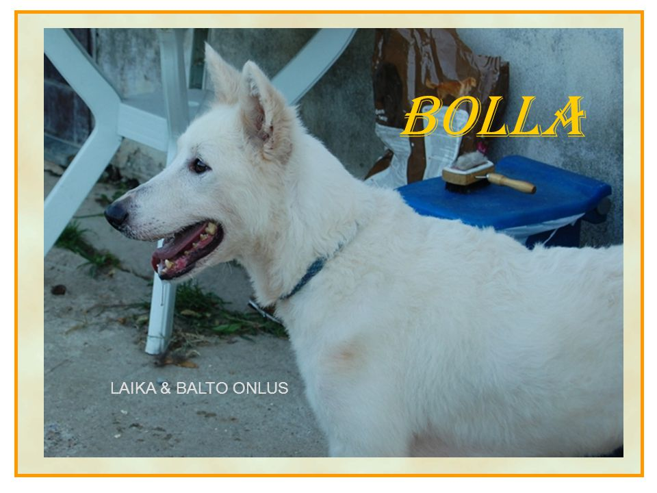 Bolla LAIKA & BALTO ONLUS
