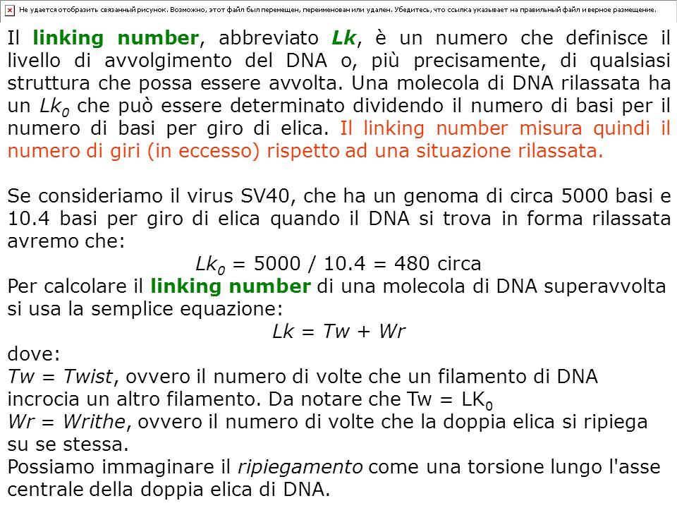 Il linking number, abbreviato Lk, è un numero che definisce il livello di avvolgimento del DNA o, più precisamente, di qualsiasi struttura che possa essere avvolta. Una molecola di DNA rilassata ha un Lk0 che può essere determinato dividendo il numero di basi per il numero di basi per giro di elica. Il linking number misura quindi il numero di giri (in eccesso) rispetto ad una situazione rilassata.