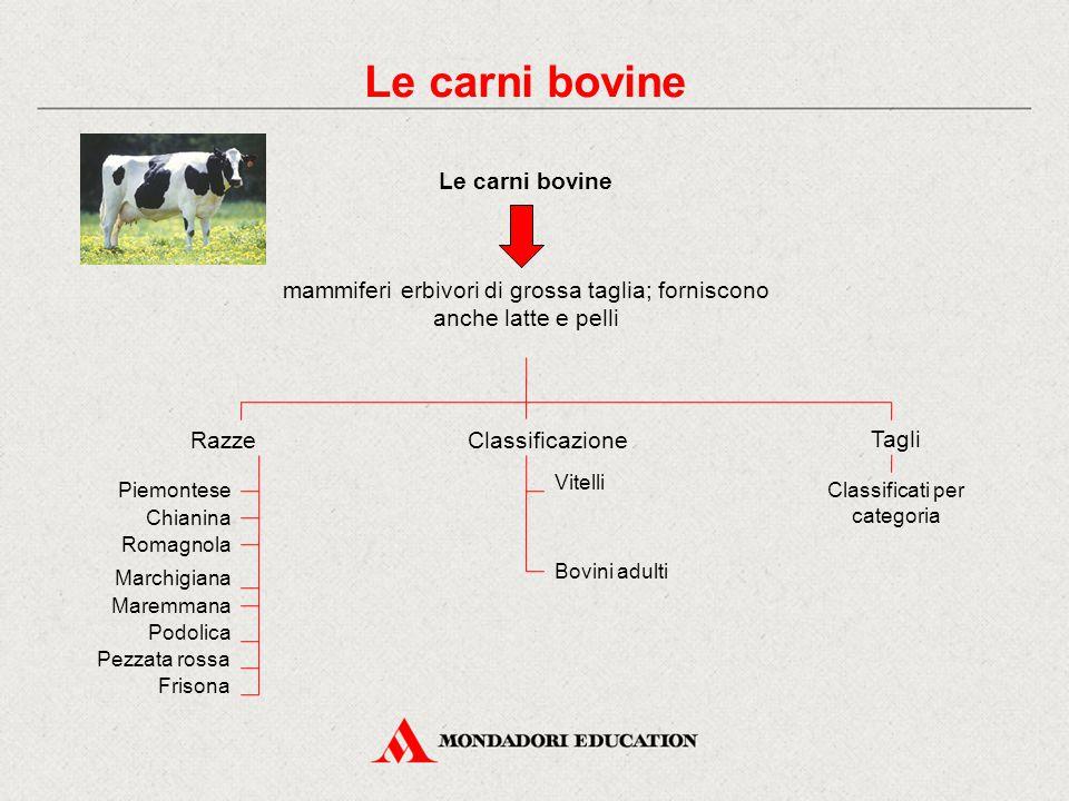 Le carni bovine Le carni bovine