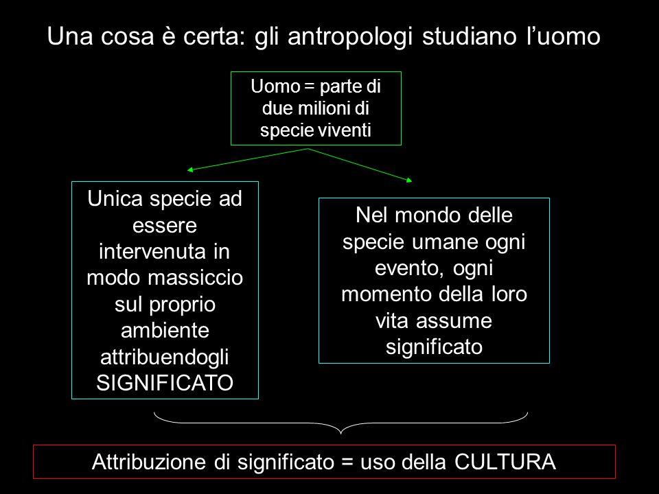 Una cosa è certa: gli antropologi studiano l'uomo
