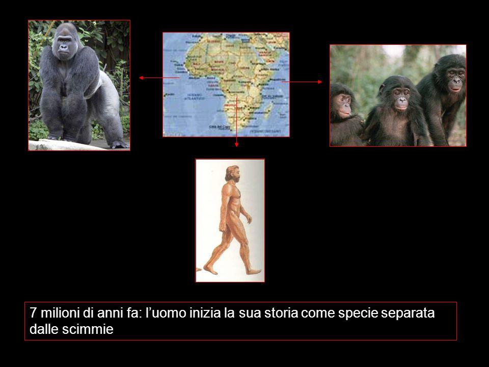 7 milioni di anni fa: l'uomo inizia la sua storia come specie separata dalle scimmie