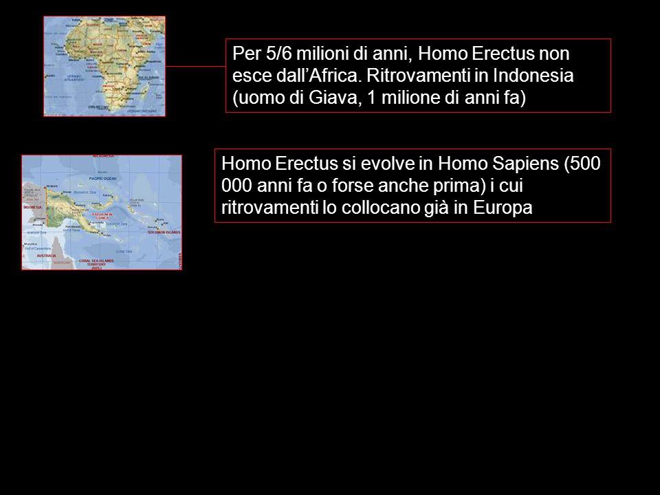 Per 5/6 milioni di anni, Homo Erectus non esce dall'Africa