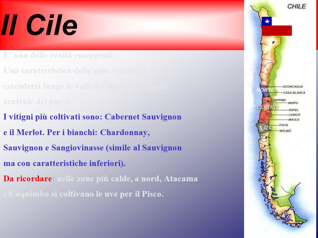 Il Cile E una delle realtà emergenti.