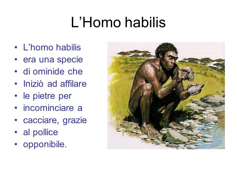 L'Homo habilis L'homo habilis era una specie di ominide che