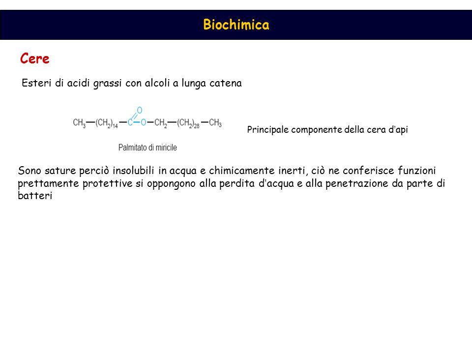 Cere Esteri di acidi grassi con alcoli a lunga catena