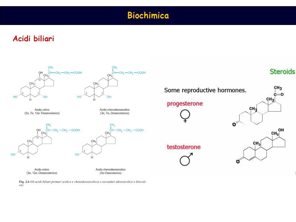 Acidi biliari