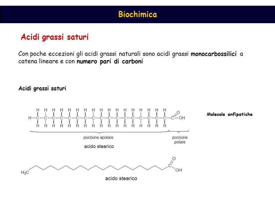 Acidi grassi saturi Con poche eccezioni gli acidi grassi naturali sono acidi grassi monocarbossilici a catena lineare e con numero pari di carboni.