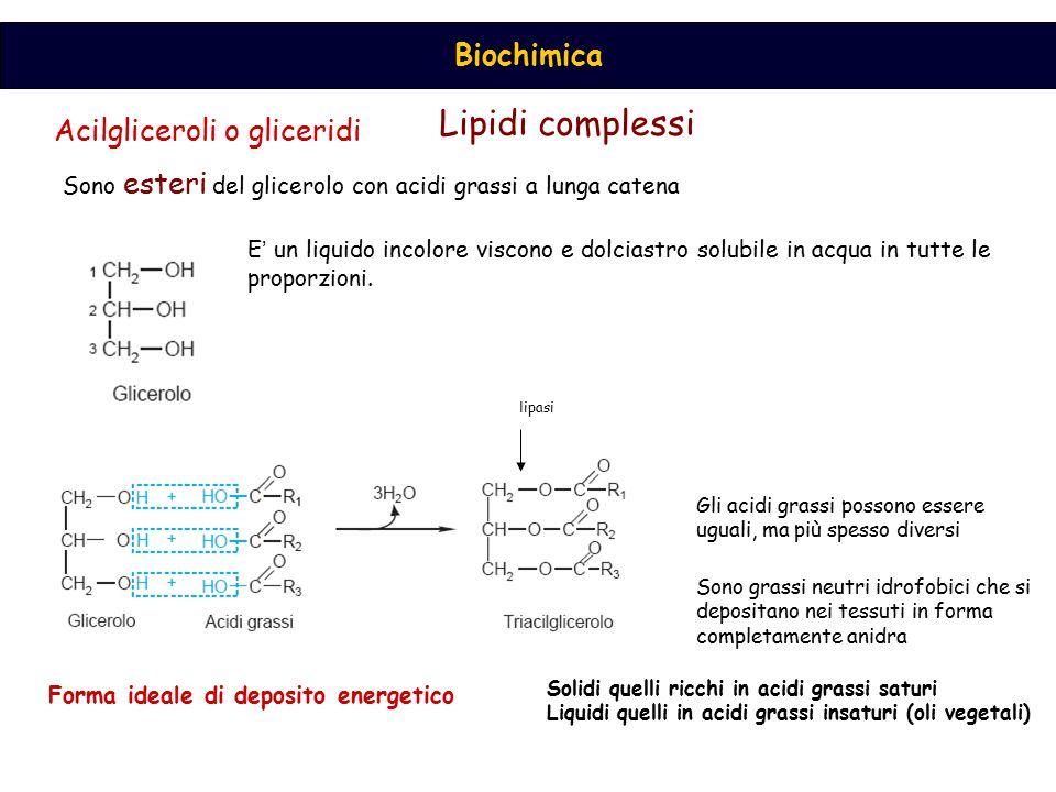 Lipidi complessi Acilgliceroli o gliceridi