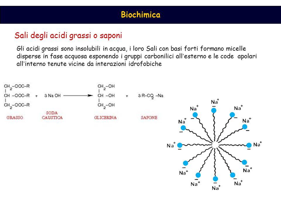 Sali degli acidi grassi o saponi