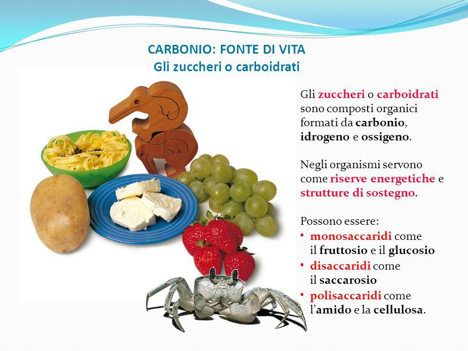 CARBONIO: FONTE DI VITA Gli zuccheri o carboidrati