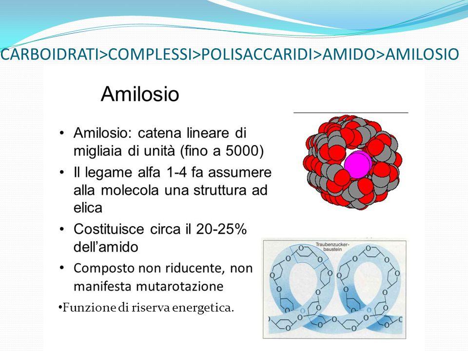 CARBOIDRATI>COMPLESSI>POLISACCARIDI>AMIDO>AMILOSIO