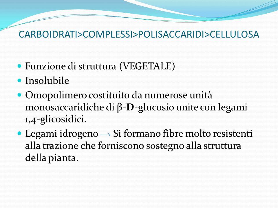 CARBOIDRATI>COMPLESSI>POLISACCARIDI>CELLULOSA