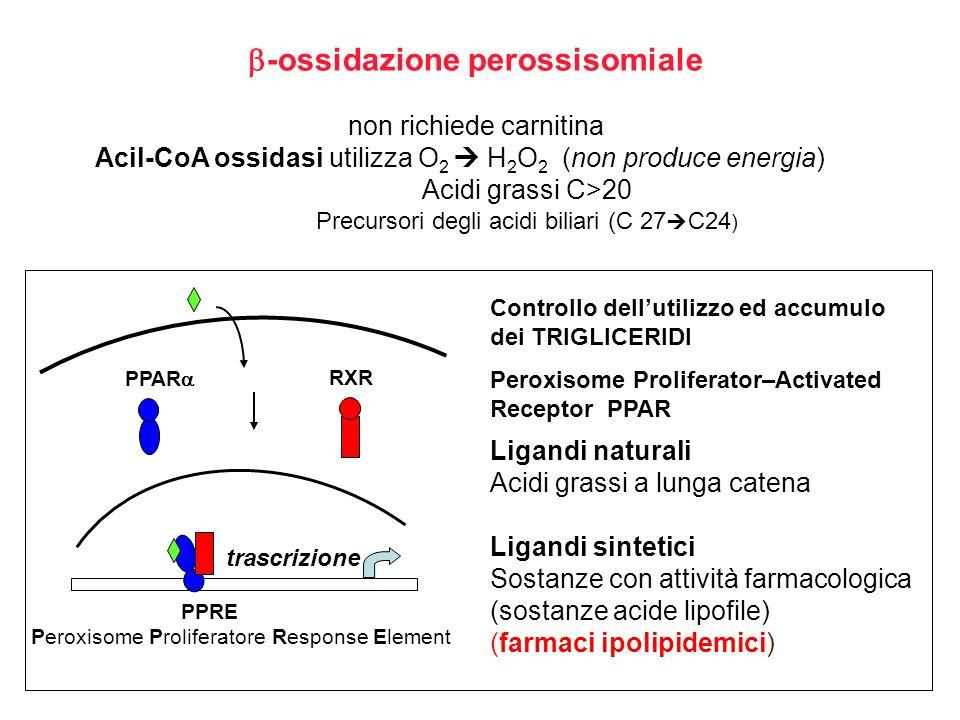 -ossidazione perossisomiale