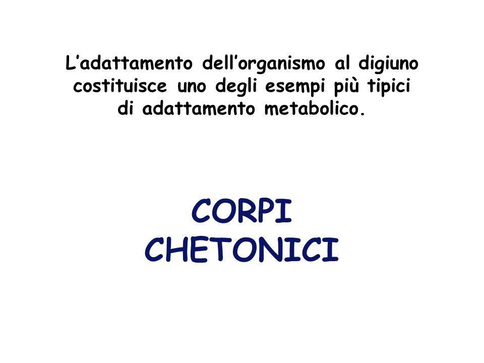 L'adattamento dell'organismo al digiuno costituisce uno degli esempi più tipici di adattamento metabolico.