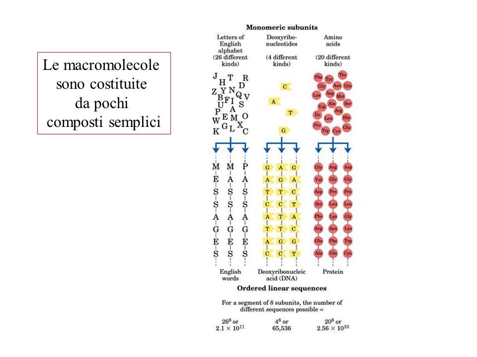 Le macromolecole sono costituite da pochi composti semplici