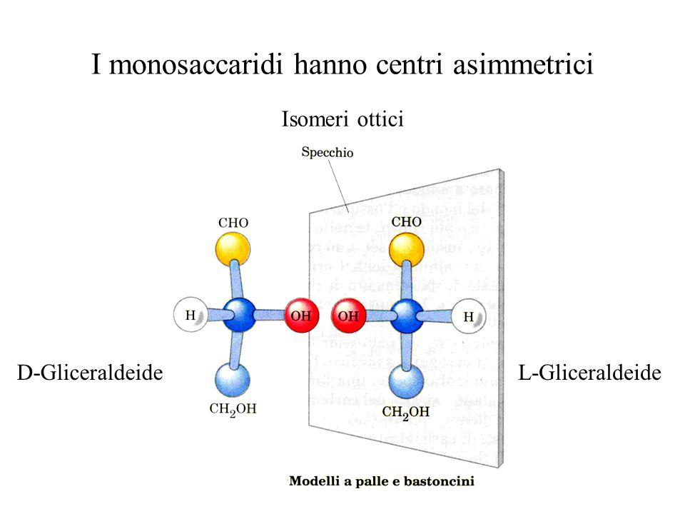 I monosaccaridi hanno centri asimmetrici