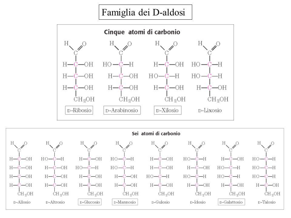 Famiglia dei D-aldosi