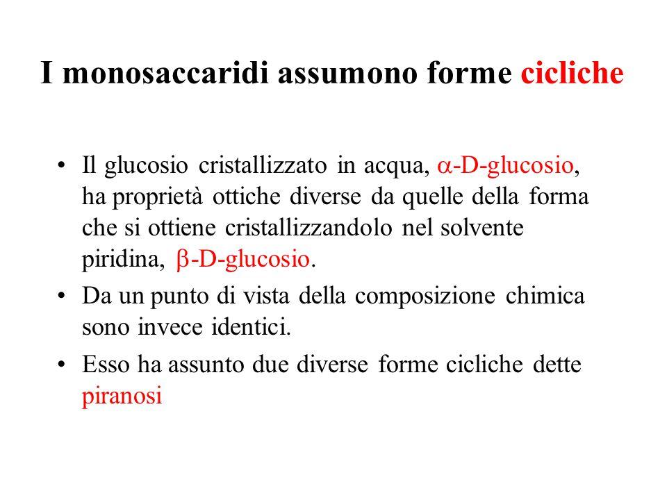 I monosaccaridi assumono forme cicliche