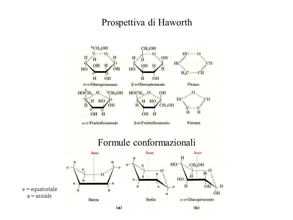 Prospettiva di Haworth