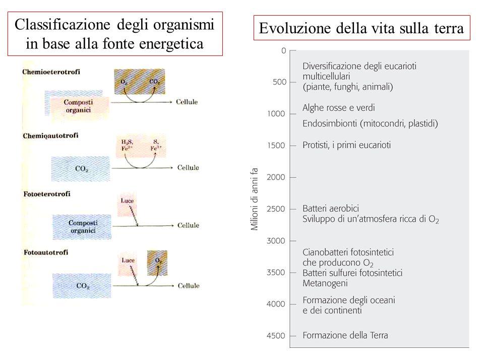 Classificazione degli organismi in base alla fonte energetica
