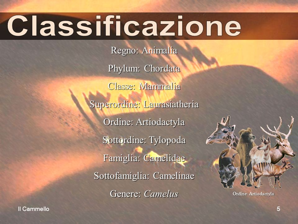 Classificazione Regno: Animalia Phylum: Chordata Classe: Mammalia