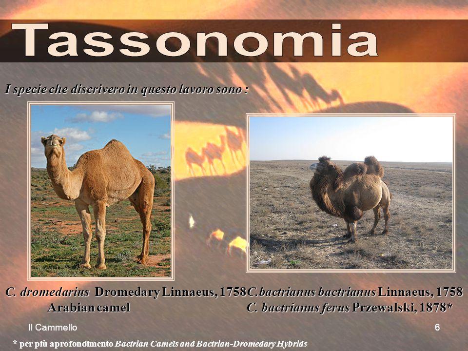 Tassonomia I specie che discrivero in questo lavoro sono :