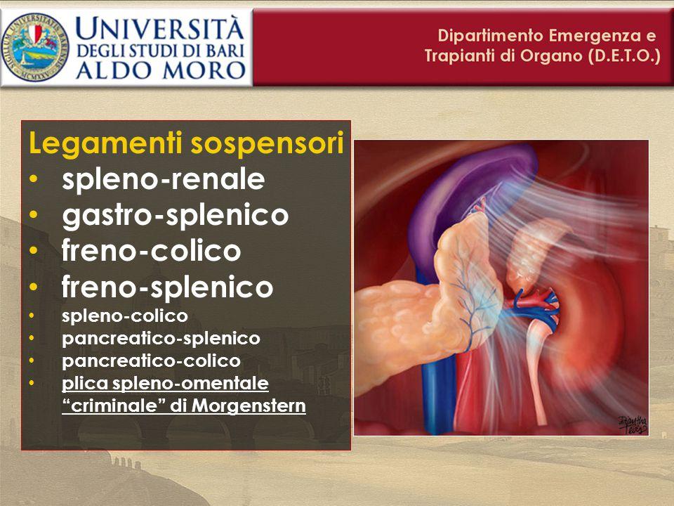 Legamenti sospensori spleno-renale gastro-splenico freno-colico