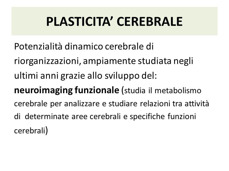 PLASTICITA' CEREBRALE