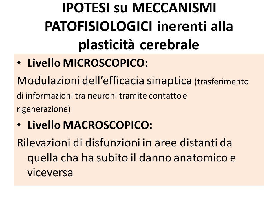 IPOTESI su MECCANISMI PATOFISIOLOGICI inerenti alla plasticità cerebrale