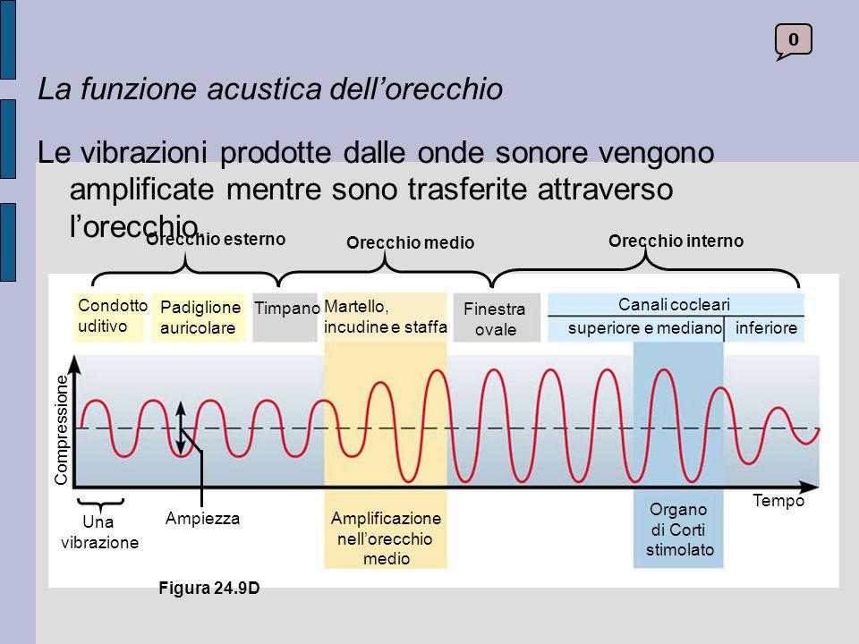 La funzione acustica dell'orecchio
