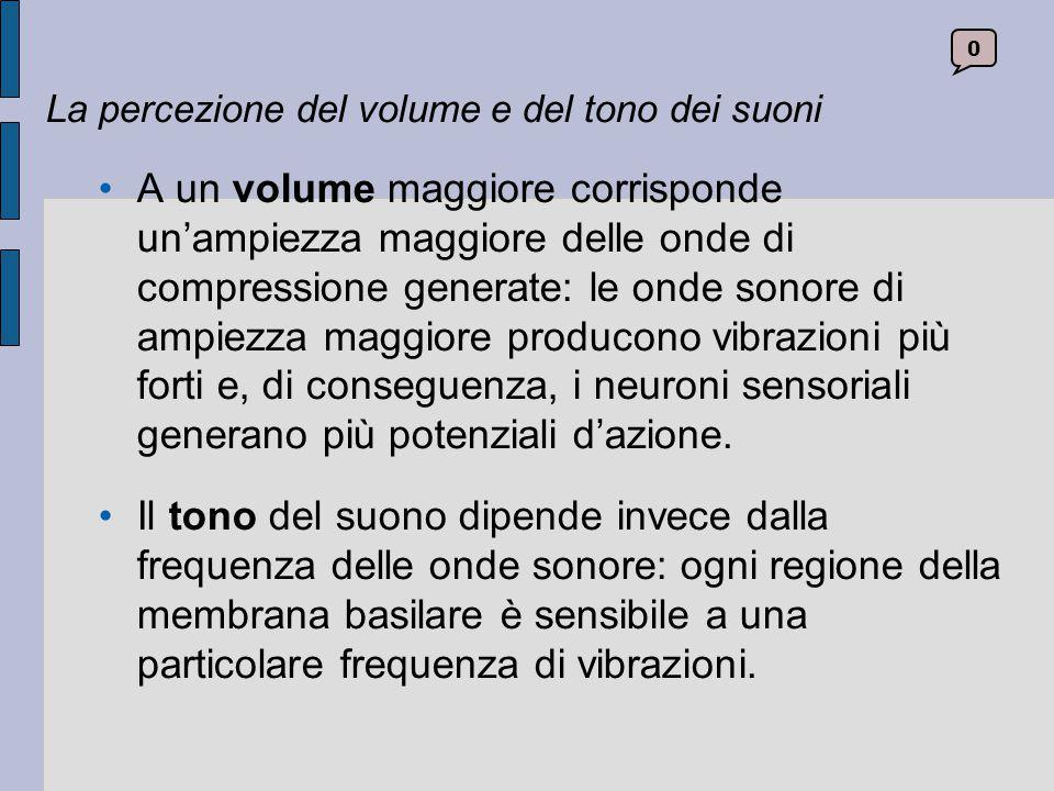 La percezione del volume e del tono dei suoni