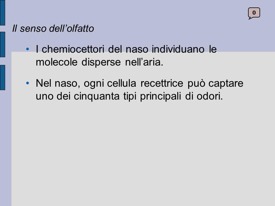 I chemiocettori del naso individuano le molecole disperse nell'aria.
