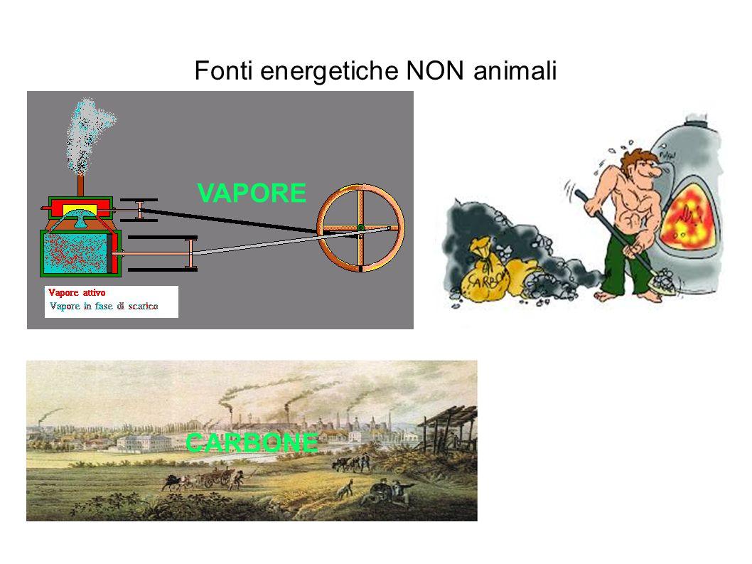 Fonti energetiche NON animali