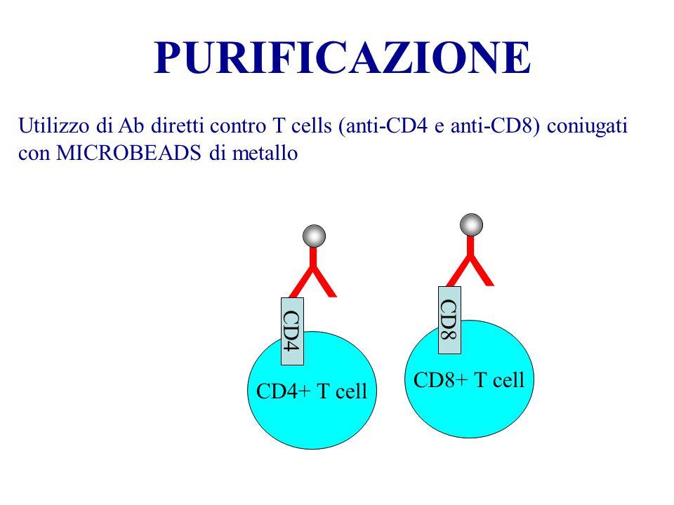 PURIFICAZIONE Utilizzo di Ab diretti contro T cells (anti-CD4 e anti-CD8) coniugati con MICROBEADS di metallo.