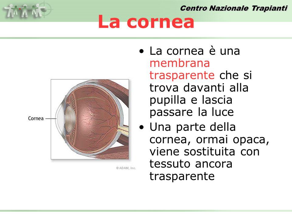 La cornea La cornea è una membrana trasparente che si trova davanti alla pupilla e lascia passare la luce.