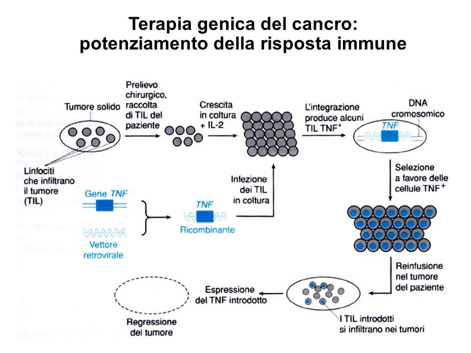 Terapia genica del cancro: potenziamento della risposta immune